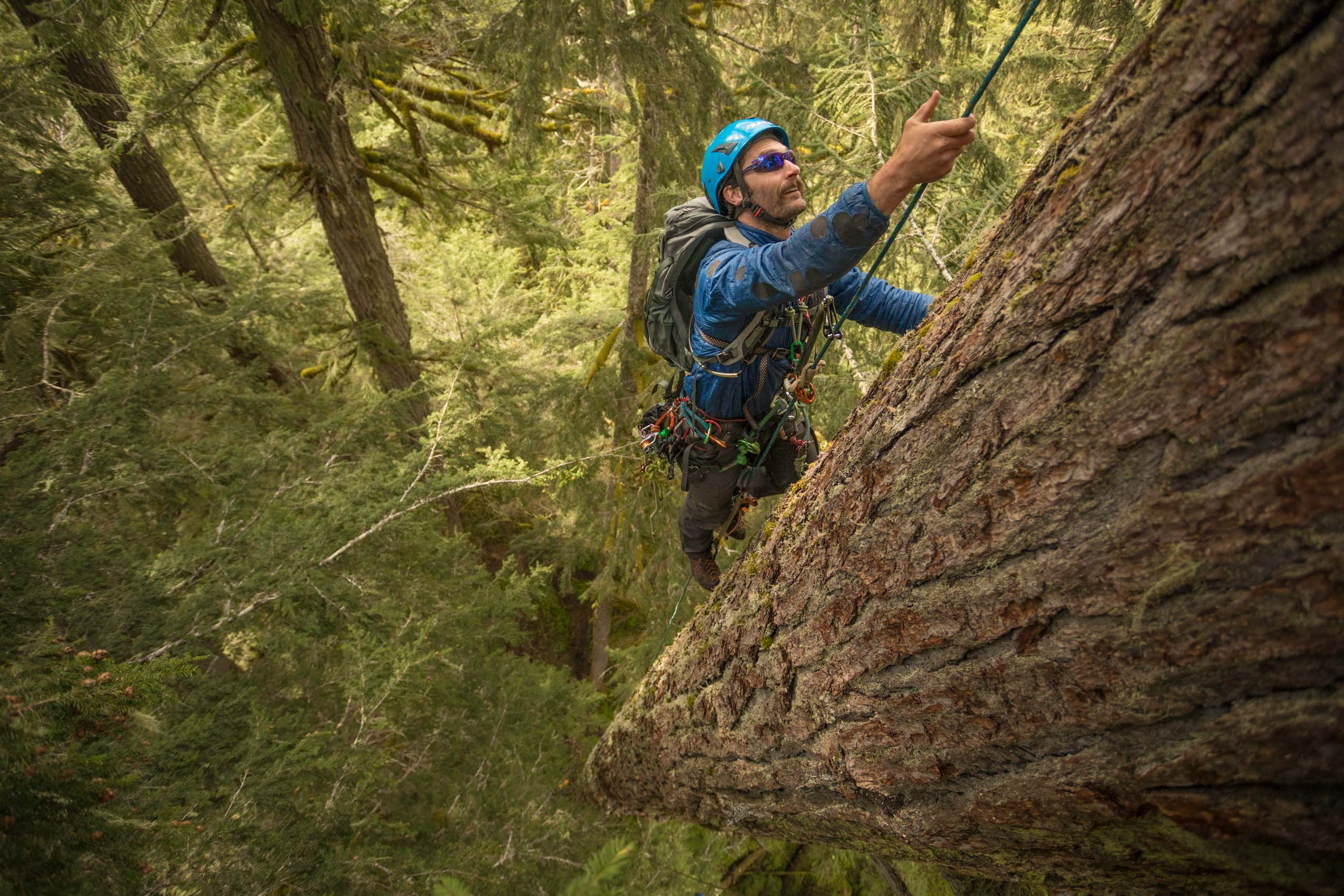 arborist climbing old growth adventure photographer Rich Crowder